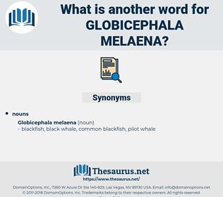 Globicephala Melaena, synonym Globicephala Melaena, another word for Globicephala Melaena, words like Globicephala Melaena, thesaurus Globicephala Melaena