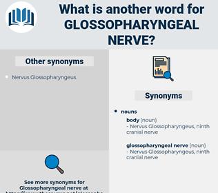 glossopharyngeal nerve, synonym glossopharyngeal nerve, another word for glossopharyngeal nerve, words like glossopharyngeal nerve, thesaurus glossopharyngeal nerve