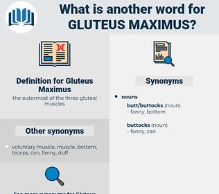 Gluteus Maximus, synonym Gluteus Maximus, another word for Gluteus Maximus, words like Gluteus Maximus, thesaurus Gluteus Maximus