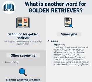 golden retriever, synonym golden retriever, another word for golden retriever, words like golden retriever, thesaurus golden retriever