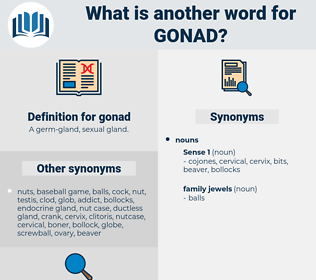 gonad, synonym gonad, another word for gonad, words like gonad, thesaurus gonad