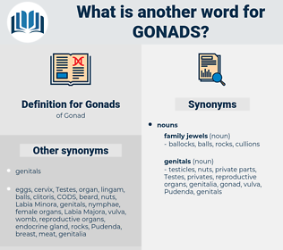 Gonads, synonym Gonads, another word for Gonads, words like Gonads, thesaurus Gonads