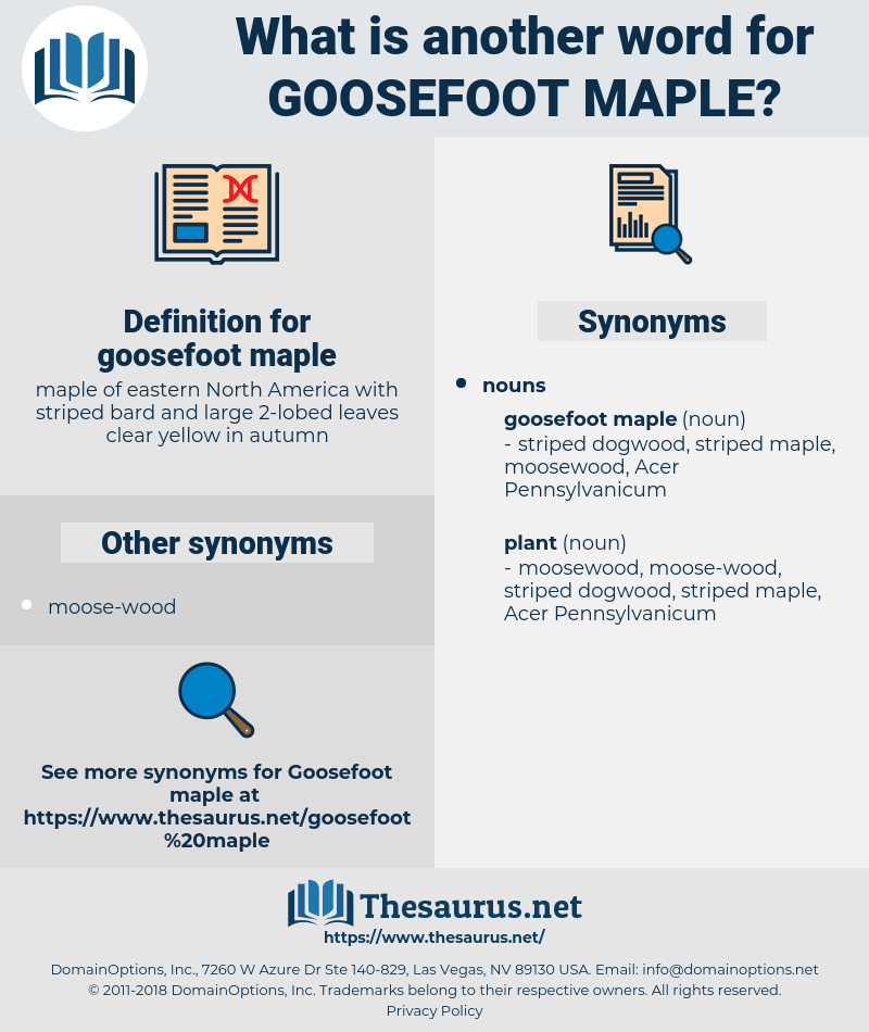 goosefoot maple, synonym goosefoot maple, another word for goosefoot maple, words like goosefoot maple, thesaurus goosefoot maple