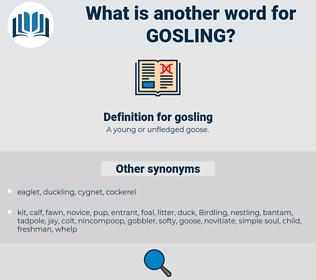 gosling, synonym gosling, another word for gosling, words like gosling, thesaurus gosling