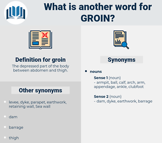 groin, synonym groin, another word for groin, words like groin, thesaurus groin