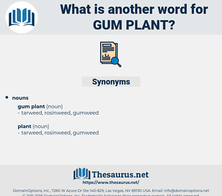 gum plant, synonym gum plant, another word for gum plant, words like gum plant, thesaurus gum plant