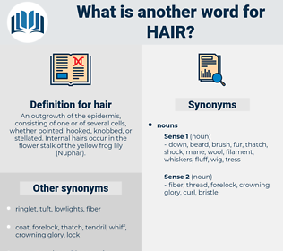 hair, synonym hair, another word for hair, words like hair, thesaurus hair