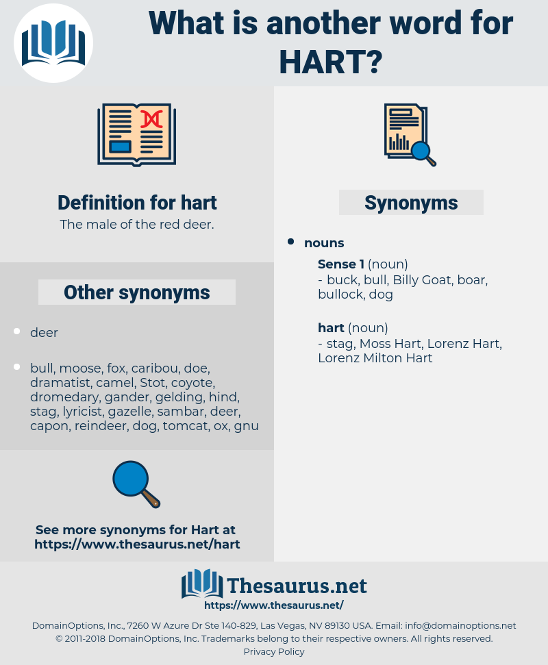 hart, synonym hart, another word for hart, words like hart, thesaurus hart