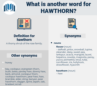 hawthorn, synonym hawthorn, another word for hawthorn, words like hawthorn, thesaurus hawthorn
