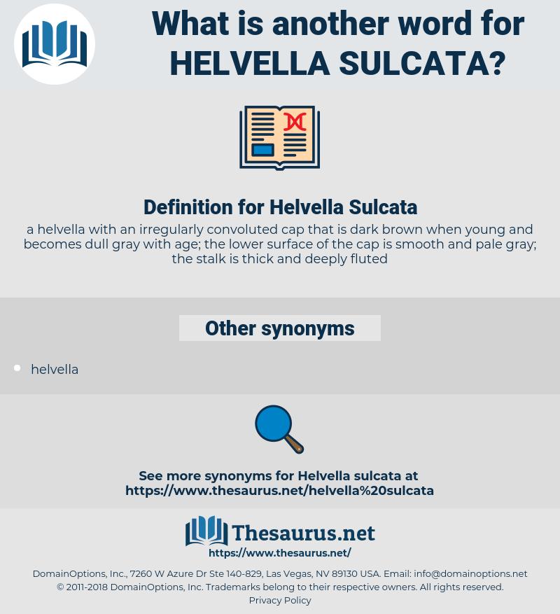 Helvella Sulcata, synonym Helvella Sulcata, another word for Helvella Sulcata, words like Helvella Sulcata, thesaurus Helvella Sulcata