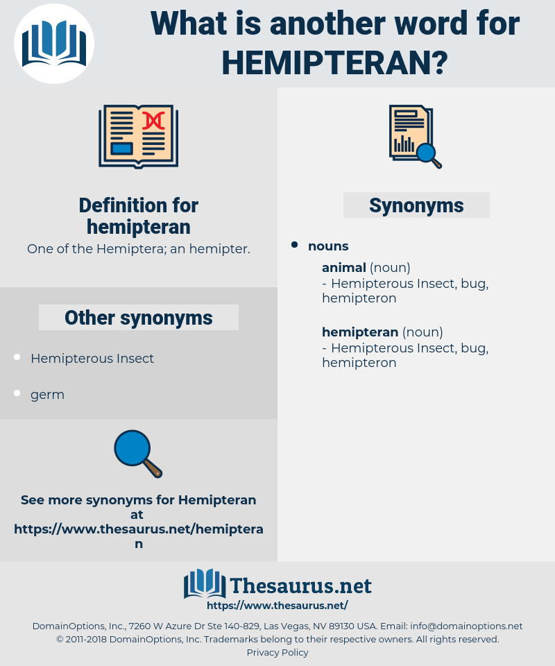hemipteran, synonym hemipteran, another word for hemipteran, words like hemipteran, thesaurus hemipteran