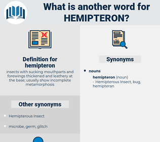 hemipteron, synonym hemipteron, another word for hemipteron, words like hemipteron, thesaurus hemipteron