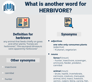 herbivore, synonym herbivore, another word for herbivore, words like herbivore, thesaurus herbivore