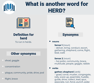 herd, synonym herd, another word for herd, words like herd, thesaurus herd