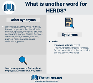 herds, synonym herds, another word for herds, words like herds, thesaurus herds