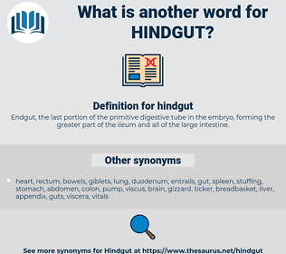 hindgut, synonym hindgut, another word for hindgut, words like hindgut, thesaurus hindgut