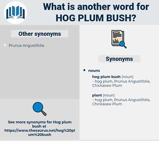 hog plum bush, synonym hog plum bush, another word for hog plum bush, words like hog plum bush, thesaurus hog plum bush