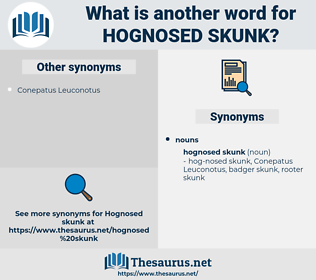 Hognosed Skunk, synonym Hognosed Skunk, another word for Hognosed Skunk, words like Hognosed Skunk, thesaurus Hognosed Skunk