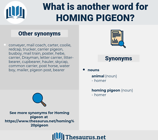 homing pigeon, synonym homing pigeon, another word for homing pigeon, words like homing pigeon, thesaurus homing pigeon
