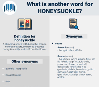 honeysuckle, synonym honeysuckle, another word for honeysuckle, words like honeysuckle, thesaurus honeysuckle