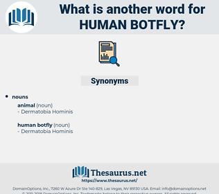 human botfly, synonym human botfly, another word for human botfly, words like human botfly, thesaurus human botfly