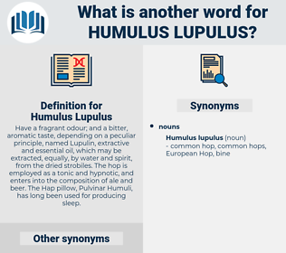 Humulus Lupulus, synonym Humulus Lupulus, another word for Humulus Lupulus, words like Humulus Lupulus, thesaurus Humulus Lupulus