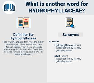 hydrophyllaceae, synonym hydrophyllaceae, another word for hydrophyllaceae, words like hydrophyllaceae, thesaurus hydrophyllaceae