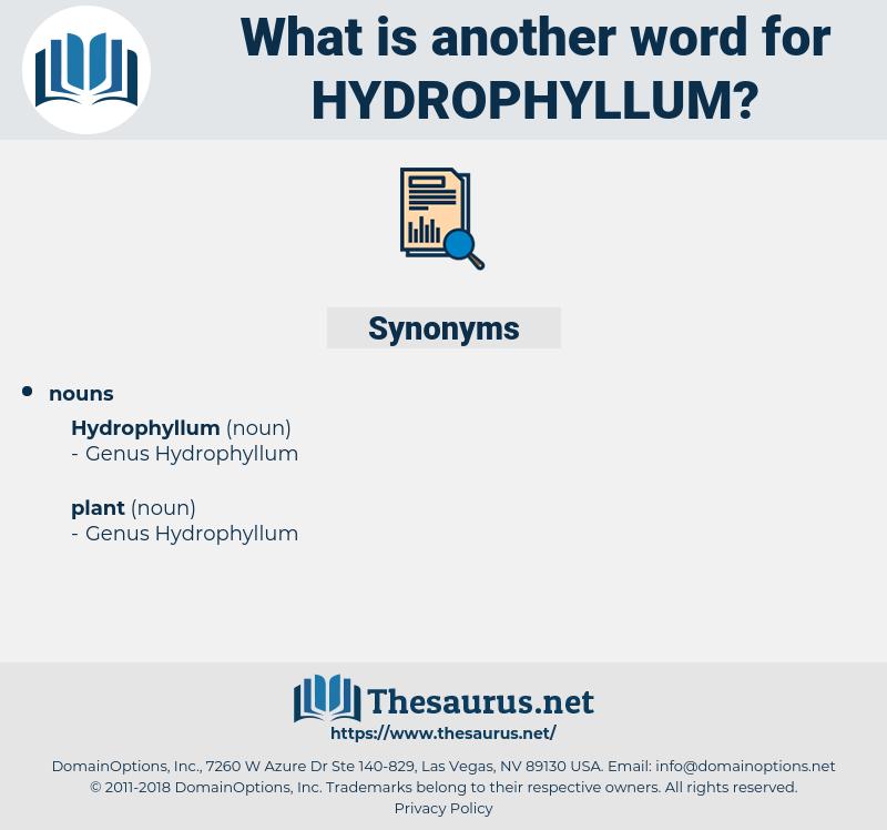 hydrophyllum, synonym hydrophyllum, another word for hydrophyllum, words like hydrophyllum, thesaurus hydrophyllum