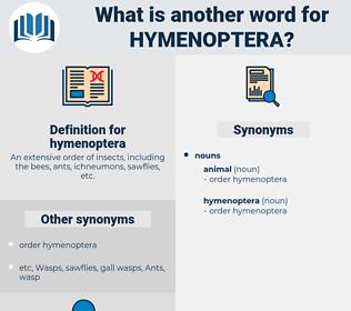 hymenoptera, synonym hymenoptera, another word for hymenoptera, words like hymenoptera, thesaurus hymenoptera