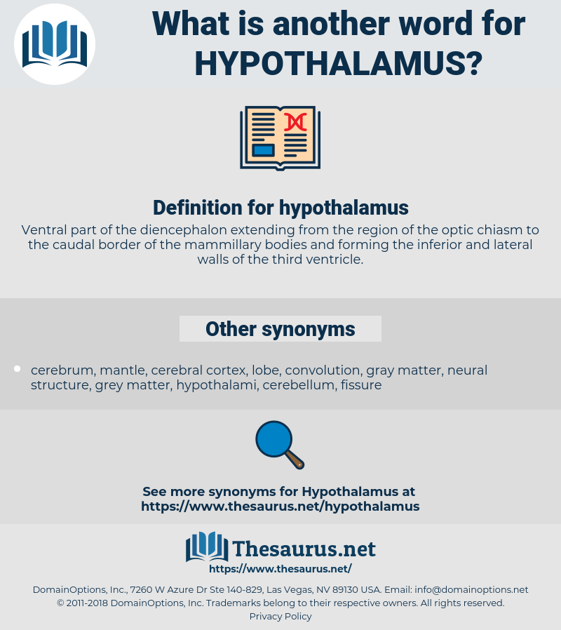 hypothalamus, synonym hypothalamus, another word for hypothalamus, words like hypothalamus, thesaurus hypothalamus