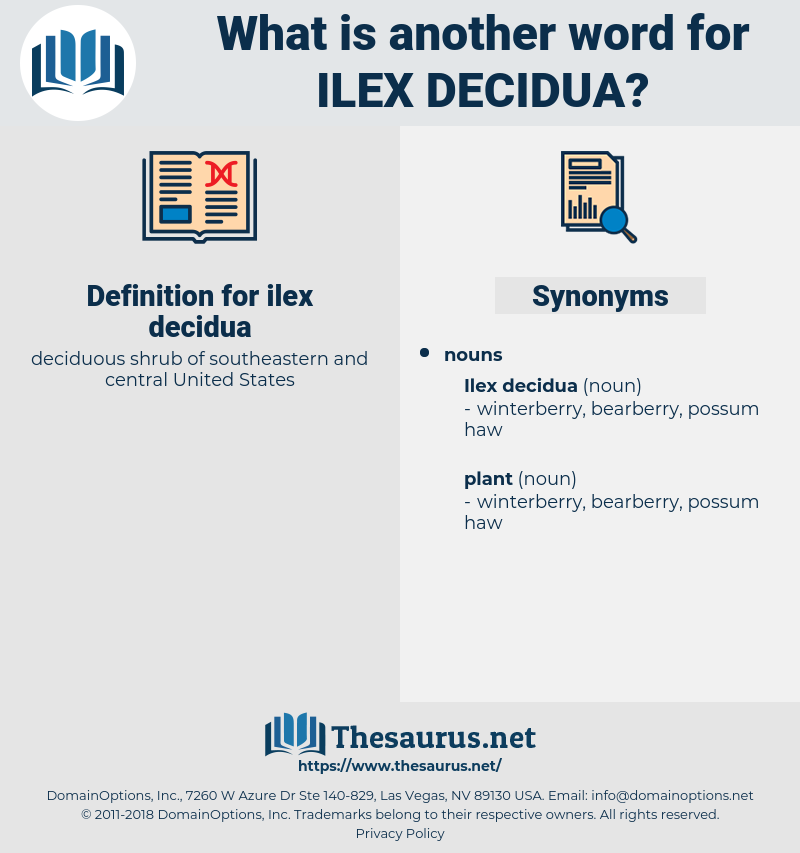 ilex decidua, synonym ilex decidua, another word for ilex decidua, words like ilex decidua, thesaurus ilex decidua