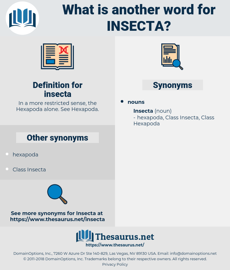 insecta, synonym insecta, another word for insecta, words like insecta, thesaurus insecta