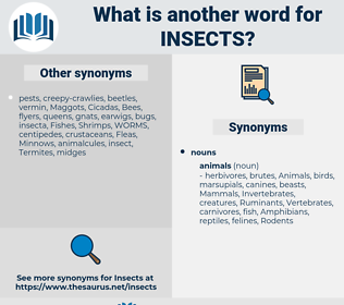 Insects, synonym Insects, another word for Insects, words like Insects, thesaurus Insects