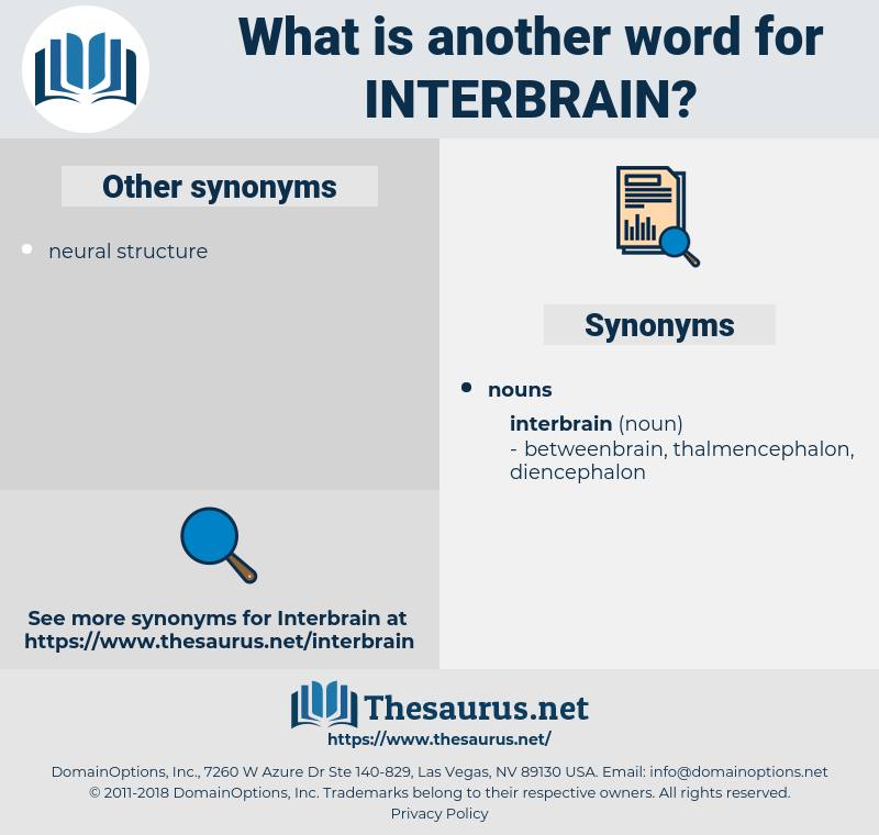 interbrain, synonym interbrain, another word for interbrain, words like interbrain, thesaurus interbrain