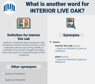 interior live oak, synonym interior live oak, another word for interior live oak, words like interior live oak, thesaurus interior live oak