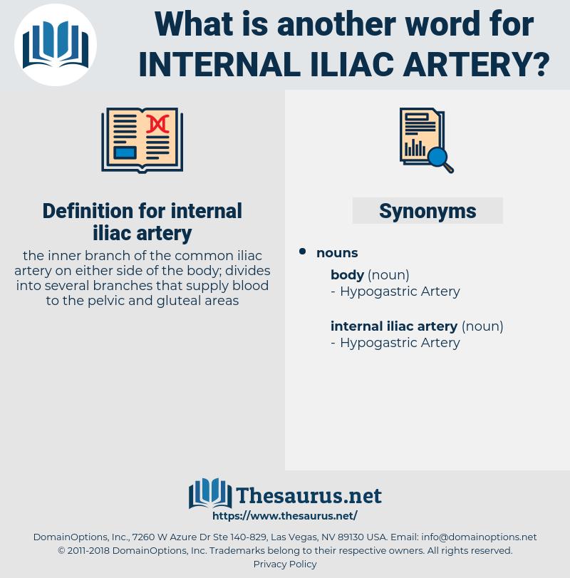 Synonyms For Internal Iliac Artery Thesaurus