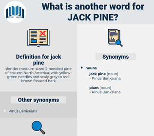 jack pine, synonym jack pine, another word for jack pine, words like jack pine, thesaurus jack pine