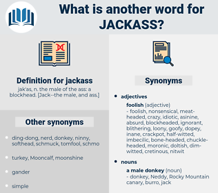 jackass, synonym jackass, another word for jackass, words like jackass, thesaurus jackass