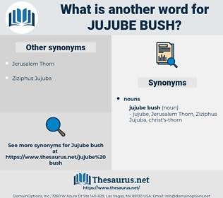 jujube bush, synonym jujube bush, another word for jujube bush, words like jujube bush, thesaurus jujube bush