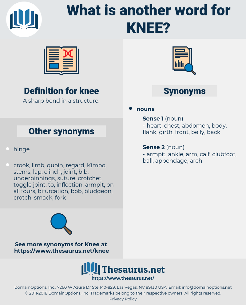 knee, synonym knee, another word for knee, words like knee, thesaurus knee