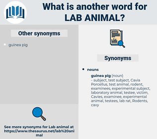 lab animal, synonym lab animal, another word for lab animal, words like lab animal, thesaurus lab animal