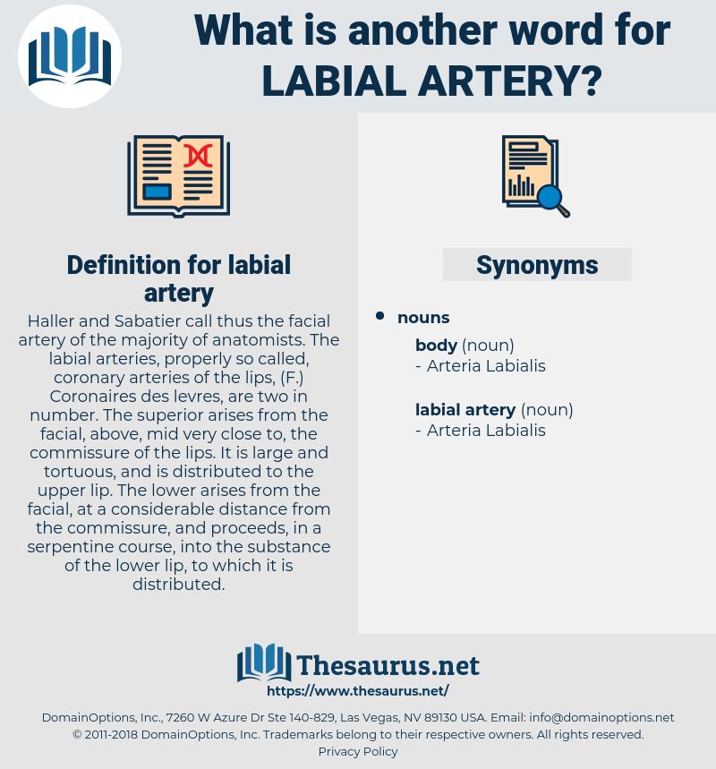 labial artery, synonym labial artery, another word for labial artery, words like labial artery, thesaurus labial artery