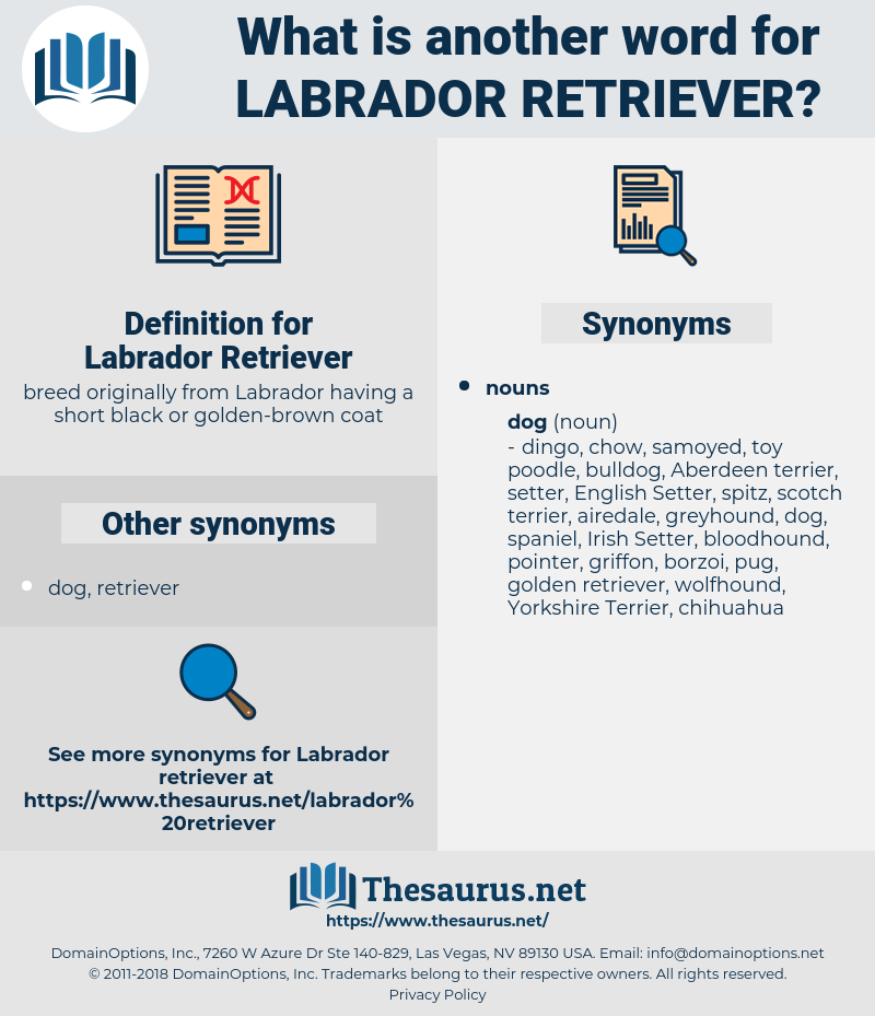 Labrador Retriever, synonym Labrador Retriever, another word for Labrador Retriever, words like Labrador Retriever, thesaurus Labrador Retriever