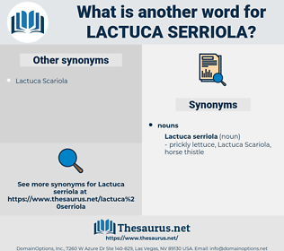 Lactuca Serriola, synonym Lactuca Serriola, another word for Lactuca Serriola, words like Lactuca Serriola, thesaurus Lactuca Serriola