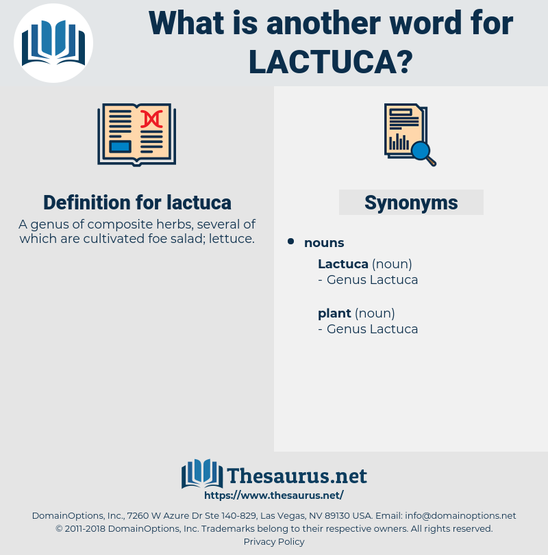 lactuca, synonym lactuca, another word for lactuca, words like lactuca, thesaurus lactuca