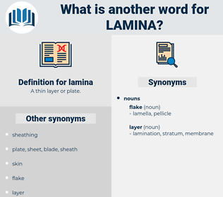 lamina, synonym lamina, another word for lamina, words like lamina, thesaurus lamina