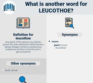leucothoe, synonym leucothoe, another word for leucothoe, words like leucothoe, thesaurus leucothoe