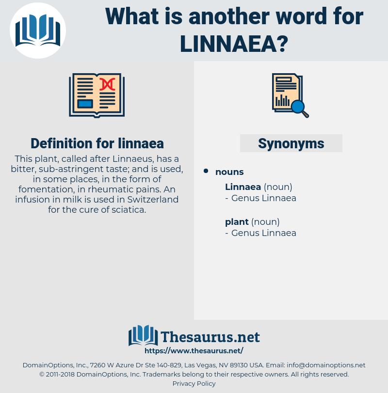 linnaea, synonym linnaea, another word for linnaea, words like linnaea, thesaurus linnaea
