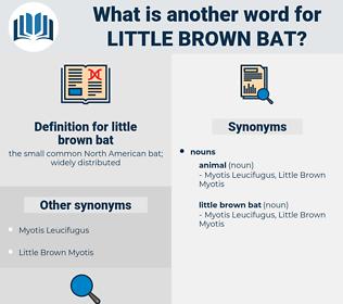 little brown bat, synonym little brown bat, another word for little brown bat, words like little brown bat, thesaurus little brown bat
