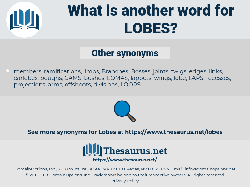 lobes, synonym lobes, another word for lobes, words like lobes, thesaurus lobes
